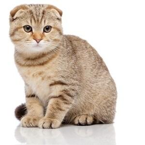 猫 の 種類 おとなしい 猫の種類【長毛種一覧】。毛並みの美しさランキングも紹介。